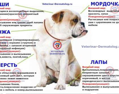 Атопический дерматит у собак: причины, симптомы, методы лечения