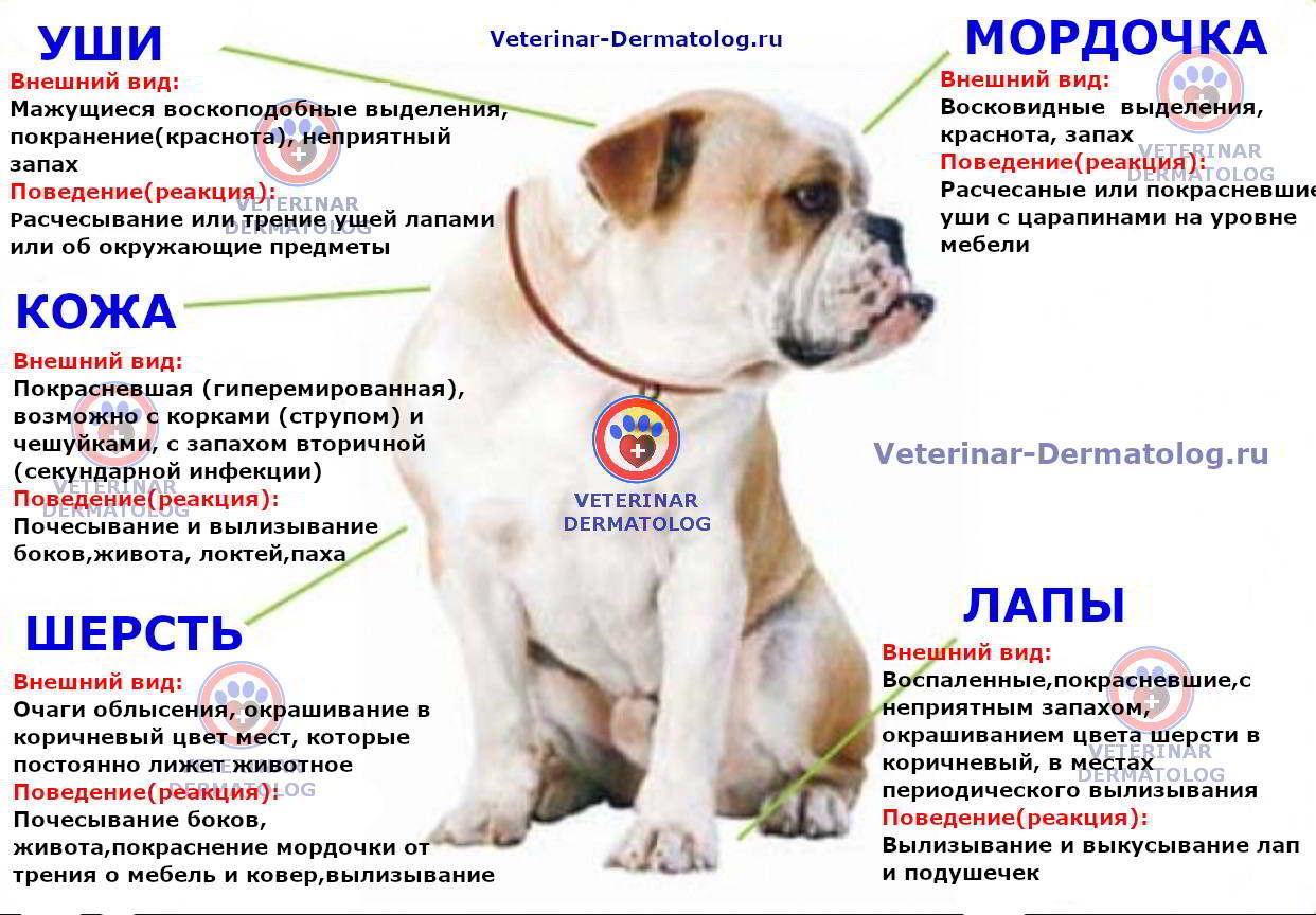 Симптомы атопического дерматита (подробная схема)