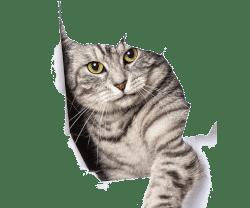 Ветеринар дерматолог для кошек