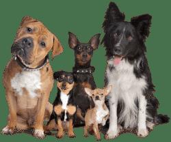 Ветеринар дерматолог для собак