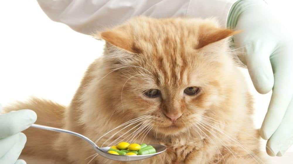 Лечение атопического дерматита у кошек стероиды и альтернативы
