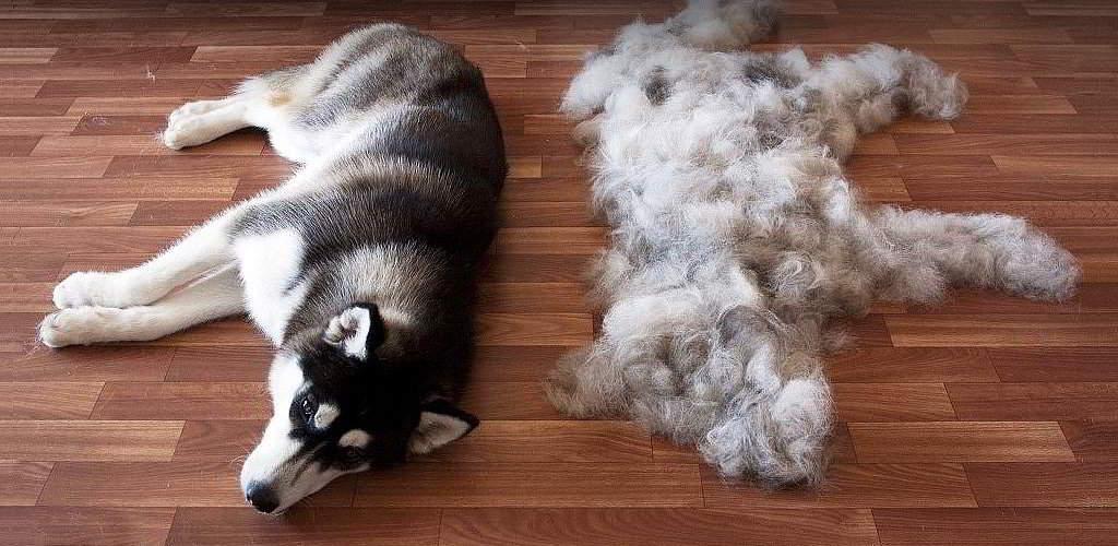 Линька у собак и кошек