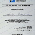 Сертификат Ветеринар Дерматолог