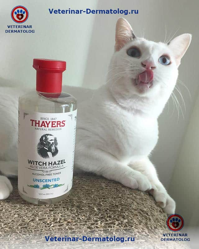 Акне и прыщи у кошек