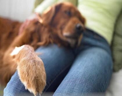 Опухоли пальцев на лапах у собак
