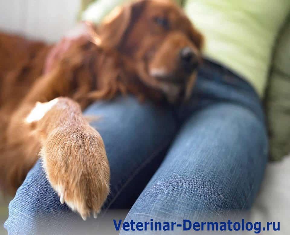 Опухоль пальцев на лапах у собак