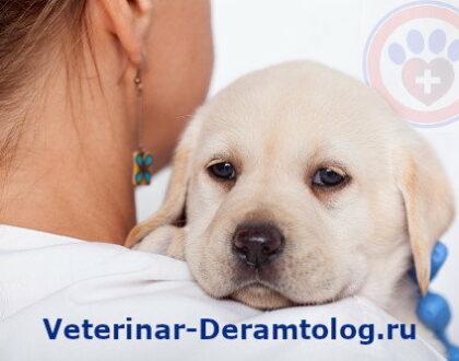 Причины для посещения ветеринара дерматолога